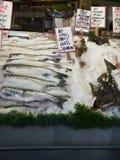 Fish at market Stock Image