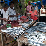 Fish market. Two men filet and cut fish on a fish market in fisher place Galle Sri Lanka Royalty Free Stock Photography
