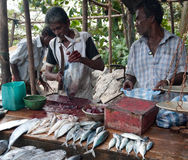 Fish market. Two men cut fish and sell fish on a fish market in fisher place Galle Sri Lanka Royalty Free Stock Photography