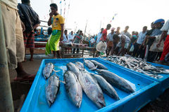 Fish market Stock Images