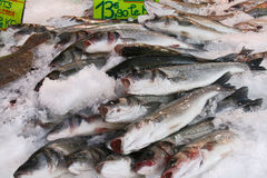 Fish on a market. Fresh Fish on ice on a french market Stock Photo