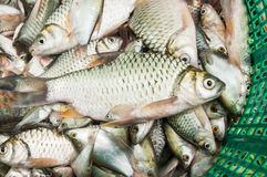 Fish in the market. Ish in the market for background Stock Photography