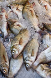 Fish Market. Fish on ice at a New York fish market Royalty Free Stock Images