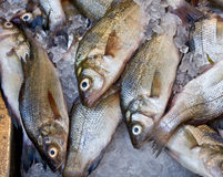 Fish Market. Fish on ice at a New York fish market Stock Image
