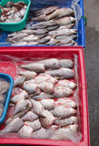 Fish at Market Royalty Free Stock Image
