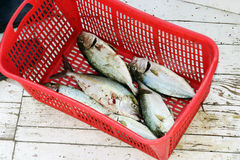 Fish market. Nice fishes (blue runer)in red basket,on some fish market Royalty Free Stock Photo