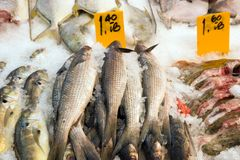 Fish market. Dead, raw fish on ice for sale at a store Stock Image