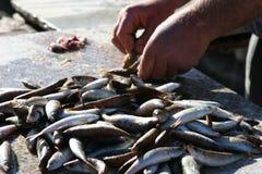 fish market Στοκ φωτογραφίες με δικαίωμα ελεύθερης χρήσης