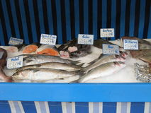 Fish market. Some frozen fish at Fish market Royalty Free Stock Photo