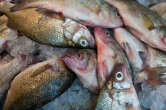 Fish at a market Royalty Free Stock Images