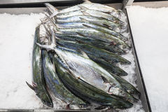 Fish Market Barracuda Ice Fresh Stock Images