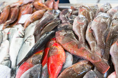 Fish on the market Royalty Free Stock Image