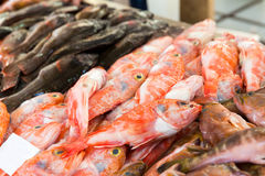 Fish on the market Royalty Free Stock Photos