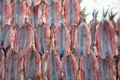 Fish Market in Catania stock photo