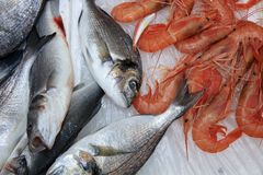 Fish Market in Catania royalty free stock images