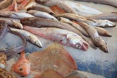 Fish Market in Catania royalty free stock photos