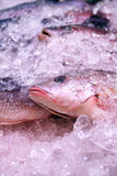 Fish Market Counter Stock Images