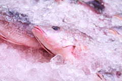 Fish Market Counter. Freshness seafood on ice closeup on counter at market Stock Image