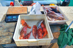 Fish market. Stock Image