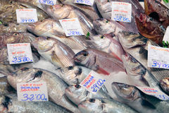 Fish on market. Fish of different species to be sold exposed on a fish market in the Spanish island of Mallorca stock photos