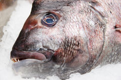 Fish on market display Royalty Free Stock Photography