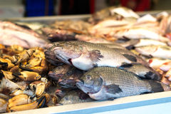Fish at market Royalty Free Stock Photos