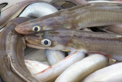 Fish market eels close-up Royalty Free Stock Photography