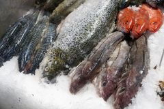 Fish at a market. Fresh fish at a market in Canada in Halifax Royalty Free Stock Images