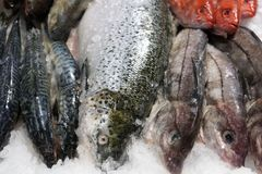 Fish at a market. Fresh fish at a market in Canada in Halifax Royalty Free Stock Photography