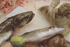 Fish market. Fresh fish displayed at market on ice Royalty Free Stock Image