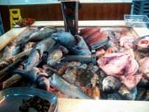 Fish in a market. Royalty Free Stock Image