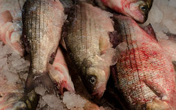 Fish Market with fresh catch on ice. Stock Images