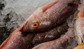 Fish Market. Fresh fish on ice at the seafood market Stock Images