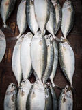 Fish market Royalty Free Stock Image