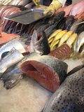 Fish market. Fresh salmon booth in fish market in Stock Image