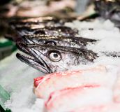 Fish in market Stock Photo