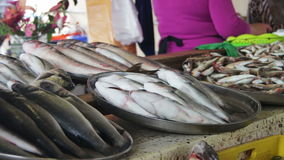 Fish Market stock video footage