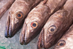 Fish on a Market Royalty Free Stock Photos