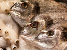 Fish on a Market Royalty Free Stock Photo