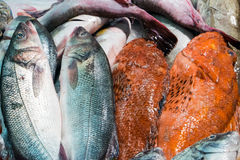 Fish at the market Stock Image