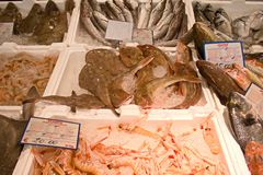 Fish market with fresh various fishes stock image