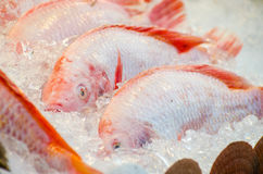 Fish at The Market Stock Photography