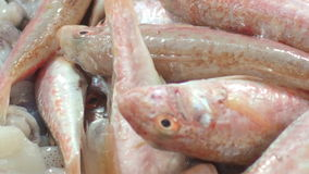 Fish Market stock video