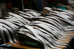 Free Fish Market In South Korea Royalty Free Stock Images - 14864399