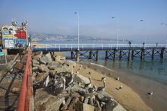Fish Market In Valparaiso, Chile Stock Photos