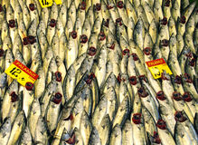 Fish in a market Royalty Free Stock Photos