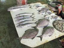 Fish market. Its photo of various fishes on sale in the fish market stock image