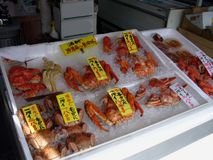 Fish Market in Japan. Crustaceans on display royalty free stock photography