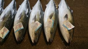 Fish Market in Kagoshima, Japan royalty free stock photography