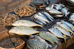 Fish market in Kerala, India Royalty Free Stock Photos